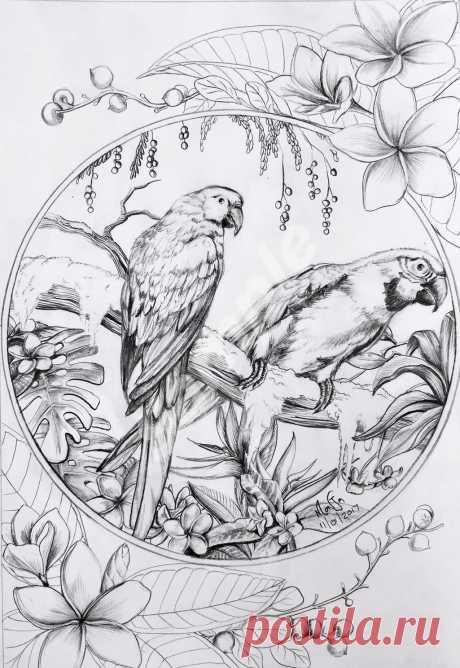 Colour My Dreams coloring book birds