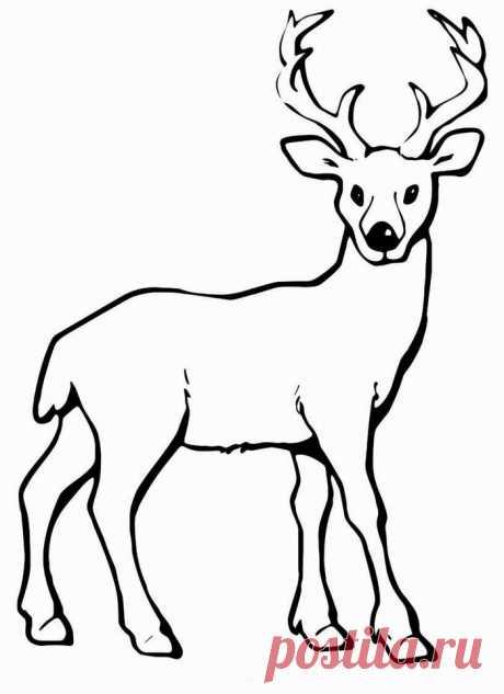 Поиск на Постиле: трафареты оленей