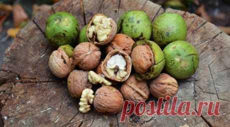 Грецкие орехи польза и вред, способы очистки, сколько съедать в день
