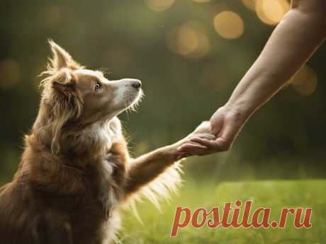Как научиться жить со своей собакой в комфорте? | nashi-pitomcy.ru