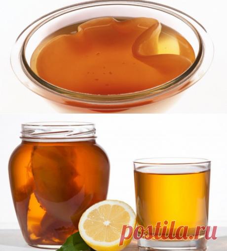 Выращиваем чайный гриб — из чая или шиповника — Полезные советы