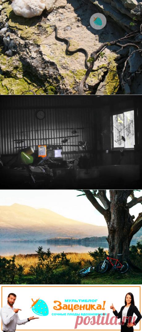 Ловец змей. Рассказ. | Заценика | мультиблог | Яндекс Дзен
