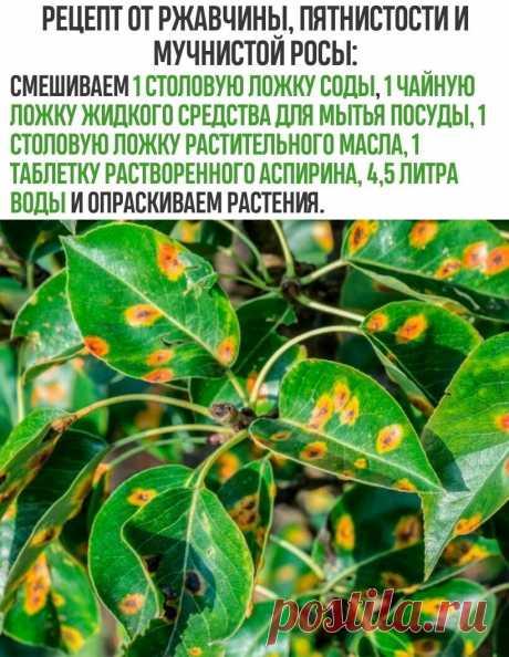 средство от ржавчины и пятнистости растений