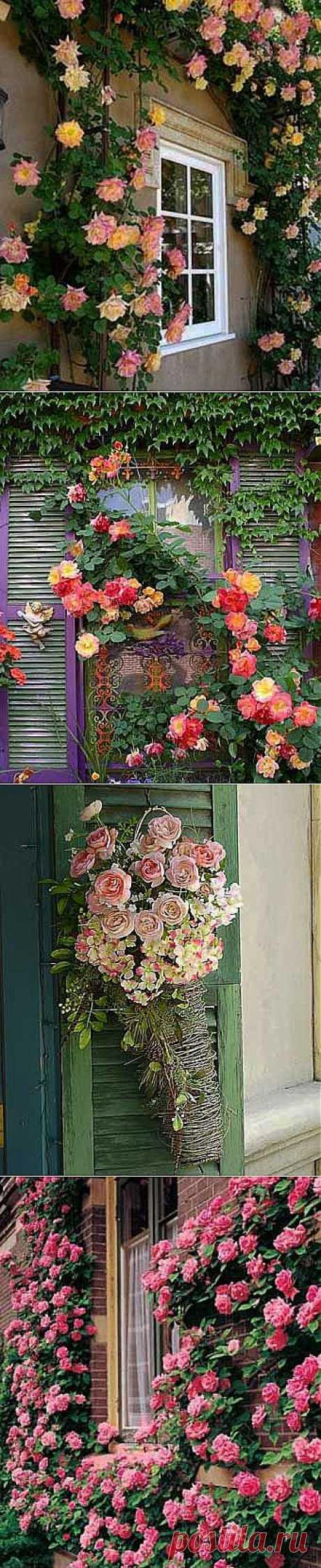 Розы возле вашего дома