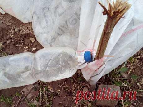 Как закрепить парник от ветра с помощью пластиковых бутылок. Быстро и надежно | Огородная фанатка | Яндекс Дзен