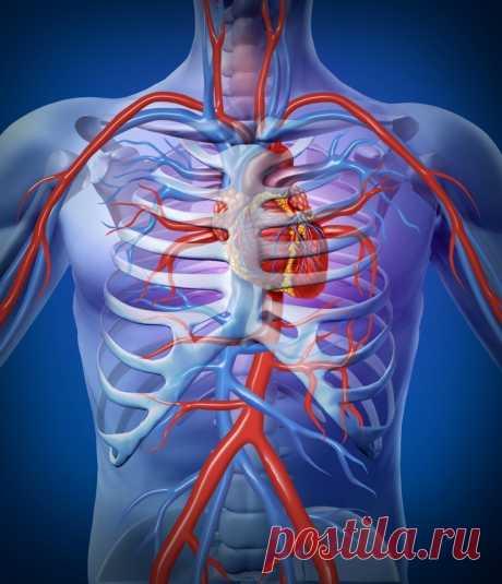 Как самостоятельно проверить здорово ли ваше сердце   Всегда в форме!