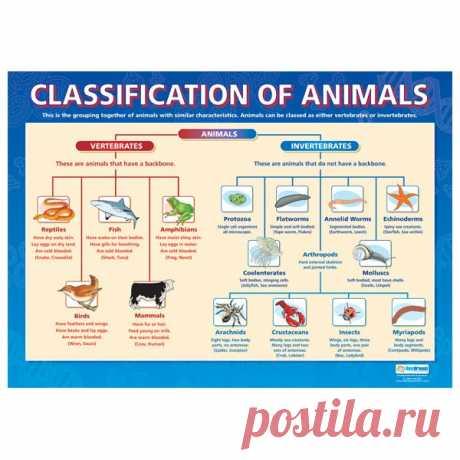 Classification of animals:  / Неформальный Английский