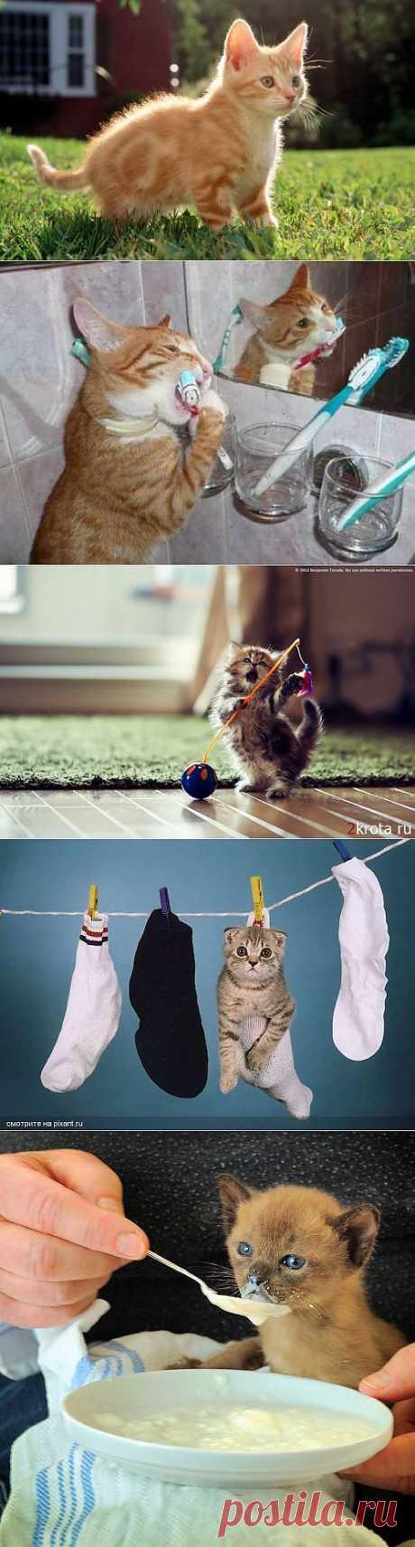 (+1) тема - Такие милые котята: как за ними ухаживать, с чего начать? (ФОТО) | Четвероногий юмор