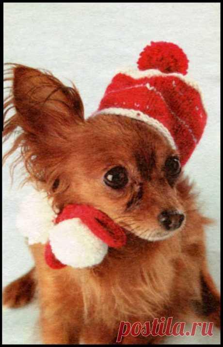 Красная шапочка Красная шапочка. Превосходная красная шапочка связаная спицами из остатков пряжи порадует Вас и вашу собачку. Эта шапочка отличный вариант для прохладных