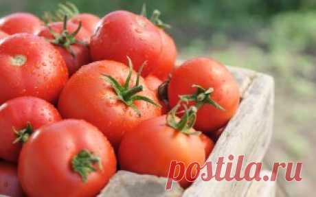 Секреты крупных томатов | На грядке (Огород.ru)