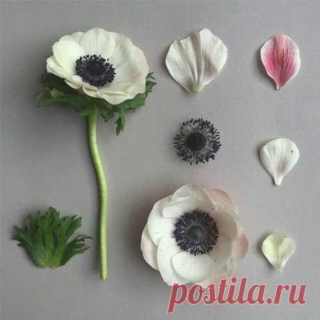 """Студия керамической флористики """"Aleksa Flora""""."""
