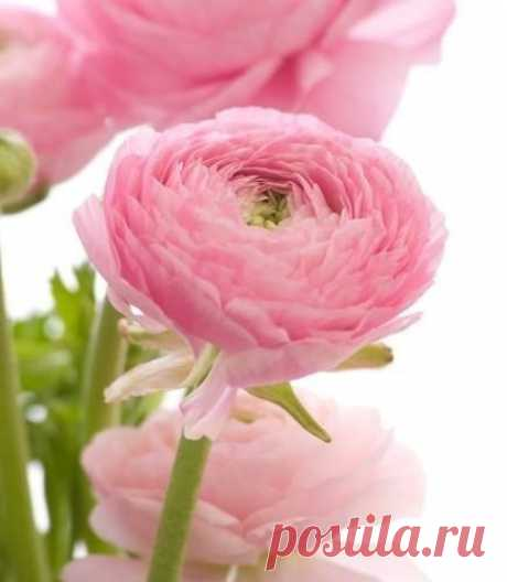 Всегда есть цветы для тех, кто хочет их видеть... Анри Матисс.