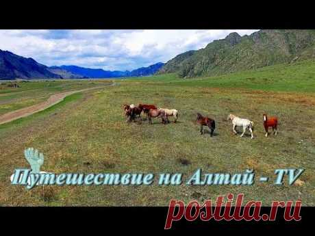 У подножия гор  Алтая - 2017. - YouTube