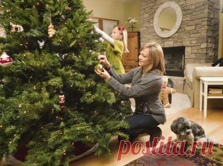 Как выбрать живую новогоднюю елку и что с ней потом делать?   Выживи сам