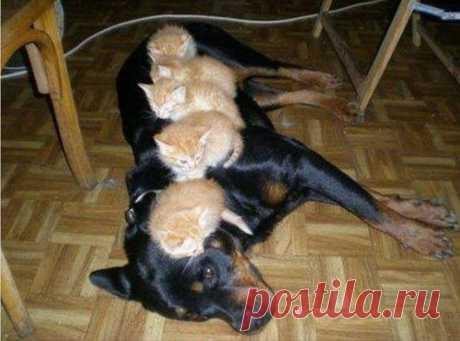 Кот в доме хозяин: 15 уморительных фото обнаглевших котов, которые приручили своих хозяев | sm-news.ru