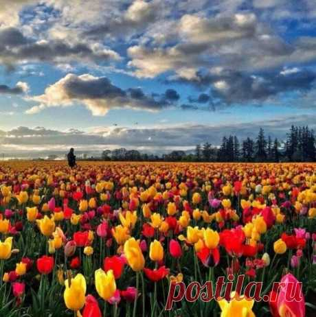 Я люблю февраль только потому, что скоро весна!