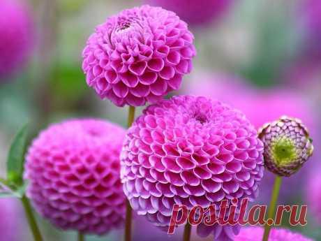 Цветы на даче: какие лучше всего посадить?