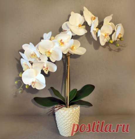 9 правил, благодаря которым орхидея будет буйно цвести круглый год. И всё исключительно своими руками!   Мой милый дом