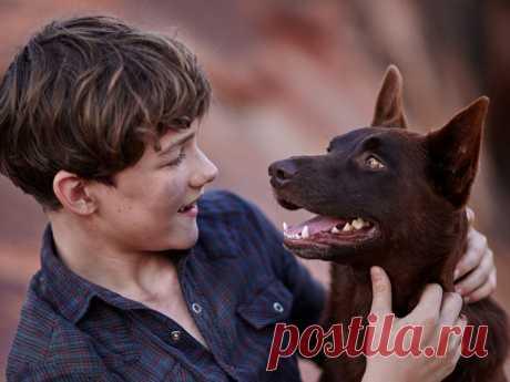 Собаки из фильмов, характеры которых не совпадают с реальностью | nashi-pitomcy.ru