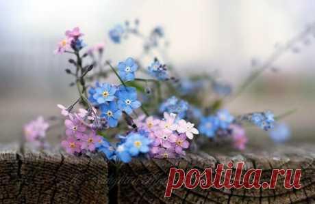 Если в твоей душе осталась хоть одна цветущая ветвь, на неё обязательно сядет поющая птица.