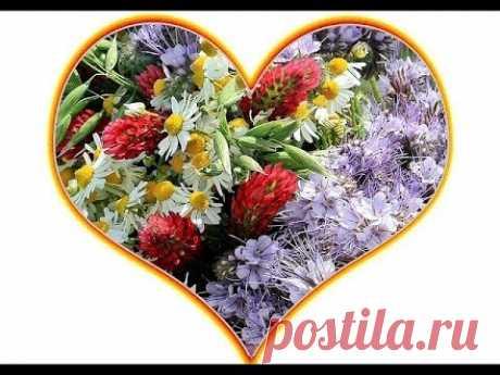 ЦВЕТЫ Свежие красивые цветы на День Рождения