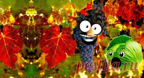 5 советов: Как вырастить виноград на даче | Садок-городок | Яндекс Дзен