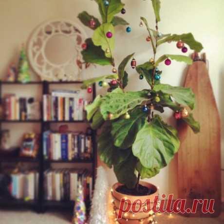 Украшение комнатных растений к новому году и рождеству.