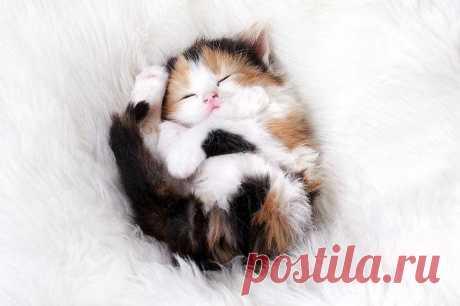22 уютно спящих котенка