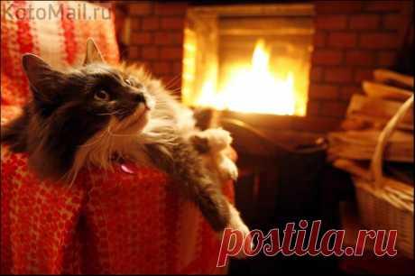 El gato en la casa en invierno