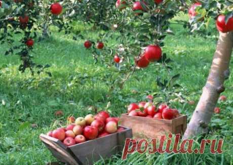 Сезонные работы в саду и огороде в июле   Дачный участок