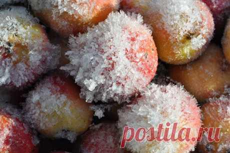 Заморозка яблок на зиму, что готовить из замороженных яблок, видео Заморозка яблок на зиму – это простая процедура, которая не требует особых усилий. Существует много способов, как сохранить свежесть и набор витаминов.
