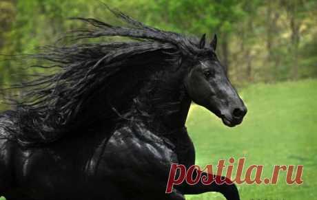 Фридрих — самый красивый конь в мире - МирТесен