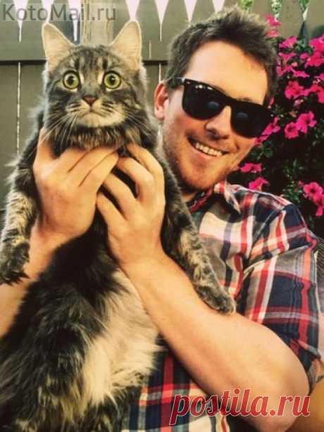 Домашнего кота впервые вынесли на улицу