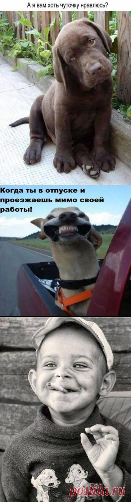 (86) Одесса! Шутит, смеется, прикалывается )