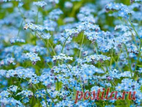 Упасть бы в траву луговую, Пьянея от запаха гроз, И слушать, как птица тоскует И трогает душу до слез.  И небом-зонтом любоваться, И облака видеть полет. Простором полей наслаждаться И видеть, как солнце поёт...  Людмила Бармина