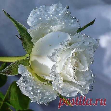 С утра Душа чиста, ........ ( фото дня,размышления,стихи,цитаты)