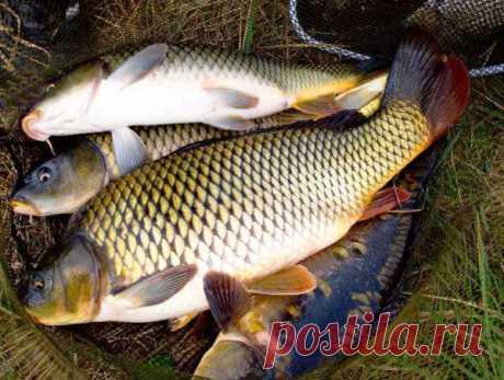 Правильный монтаж ходовой донки на крупную рыбу | Блоги о даче и огороде, рецептах, красоте и правильном питании, рыбалке, ремонте и интерьере