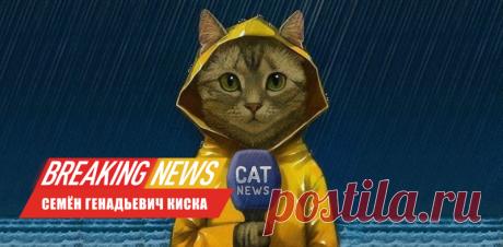 Кошки различают слова и знают как их зовут  — ЖЖ