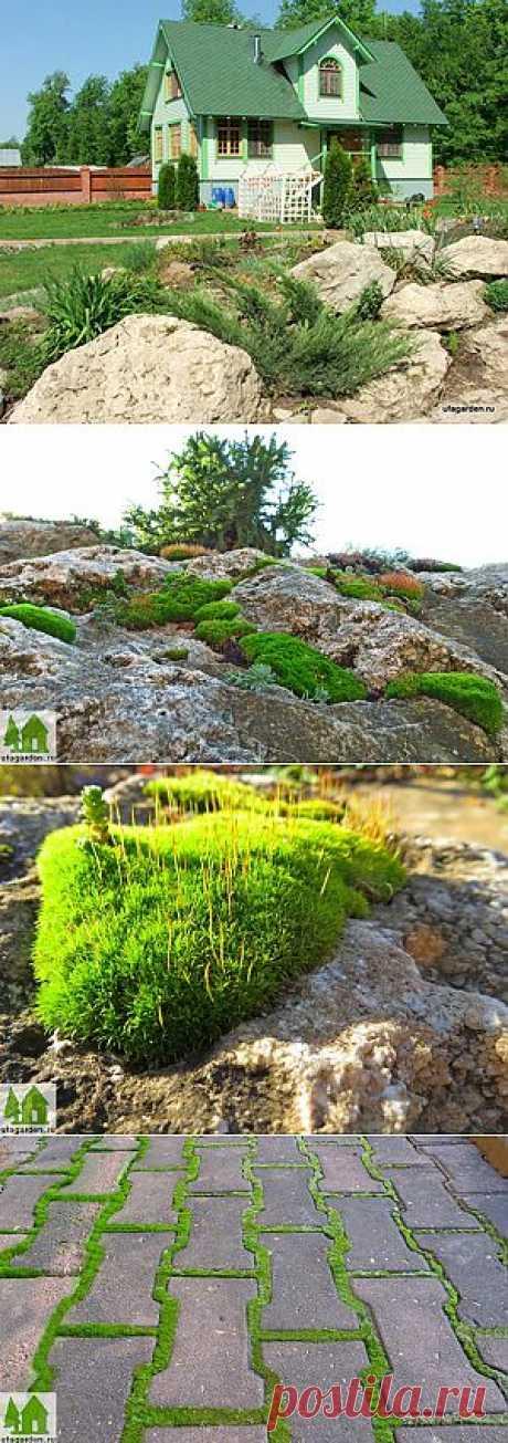 Мох на камнях | Дачная жизнь - сад, огород, дача. Мох - растение для альпийской горки.