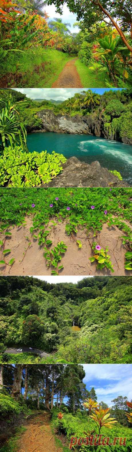 » Потрясающие сады острова Мауи Это интересно!