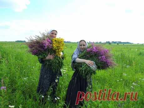 Целебные травы, позволяющие очистить сосуды и улучшить кровообращение мозга.   Дачные советы   Яндекс Дзен