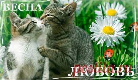Весна - Любовь ~ Эпиграммы