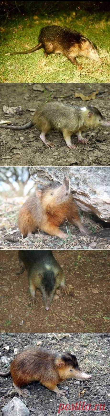 Смотреть изображения щелезубов | Зооляндия