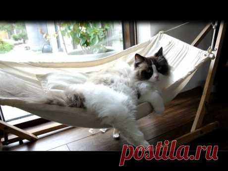 Timo The Cat And His Hammock Experiences (compilation) - YouTube