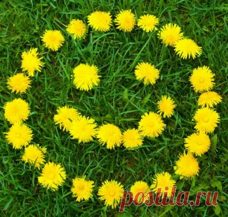 Мир внутри нас, улыбка одуванчика и еще 49 способов сохранять осознанность | Блог издательства «Манн, Иванов и Фербер»