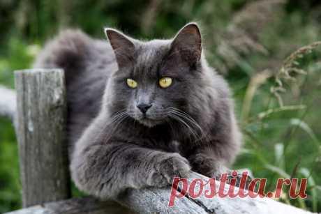 11 лайфхаков для владельцев котов и кошек