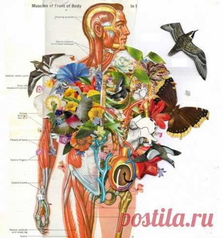 Правила здоровья по Болотову Борис Болотов — широко известный ученый и изобретатель различных методов оздоровления и омоложения организма. Он излечил многих, и основные правила, которые используют ученый, рассмотрим в статье.Осно...
