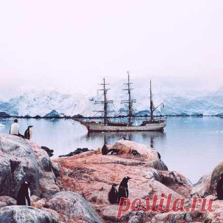 #Антарктика@discoverygroup
