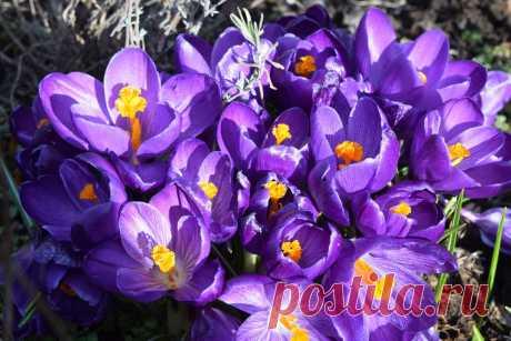 Весна на участке встречала цветами
