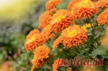 Какие цветы сажают на рассаду в феврале? | Прочие многолетники (Огород.ru)